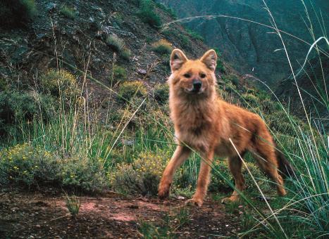 新版《国家重点保护野生动物名录》公布